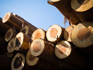 無垢柱の原木